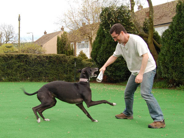 Man playing on a artificial lawn with his dog